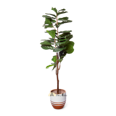 Fiddle Leaf Fig Faux Plant 1.8m - theattic-dubai.com