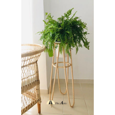 Vanilla Tall Rattan Planter, Natural with White pot