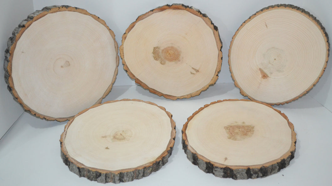 Aspen Wood Slices 10 1/2