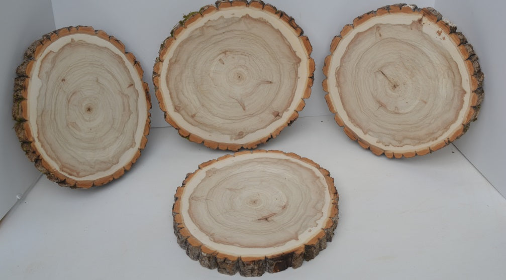 Balm of Gilead Wood Slices 11 1/2