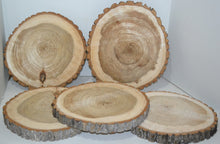 "Balm of Gilead Wood Slices 9"" to 11"" diameter x 1"" Small & Wholesale Quantities"