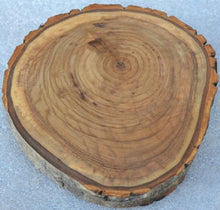 "Balm of Gilead Wood Slices - Ten  7 1/2"" to 9"" diameter x 1"" thick Wholesale"