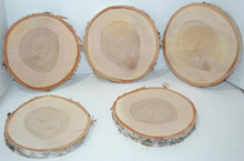 "Birch Wood Slices  9 "" to 11"" x 1"" Thick"