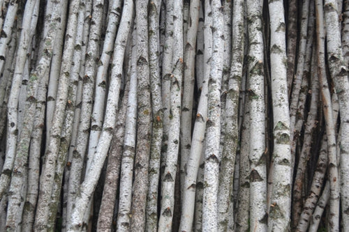 Birch Poles Wholesale