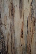 Ambrosia Spalted Maple Live Edge Slab (SMLE-11)  Sold