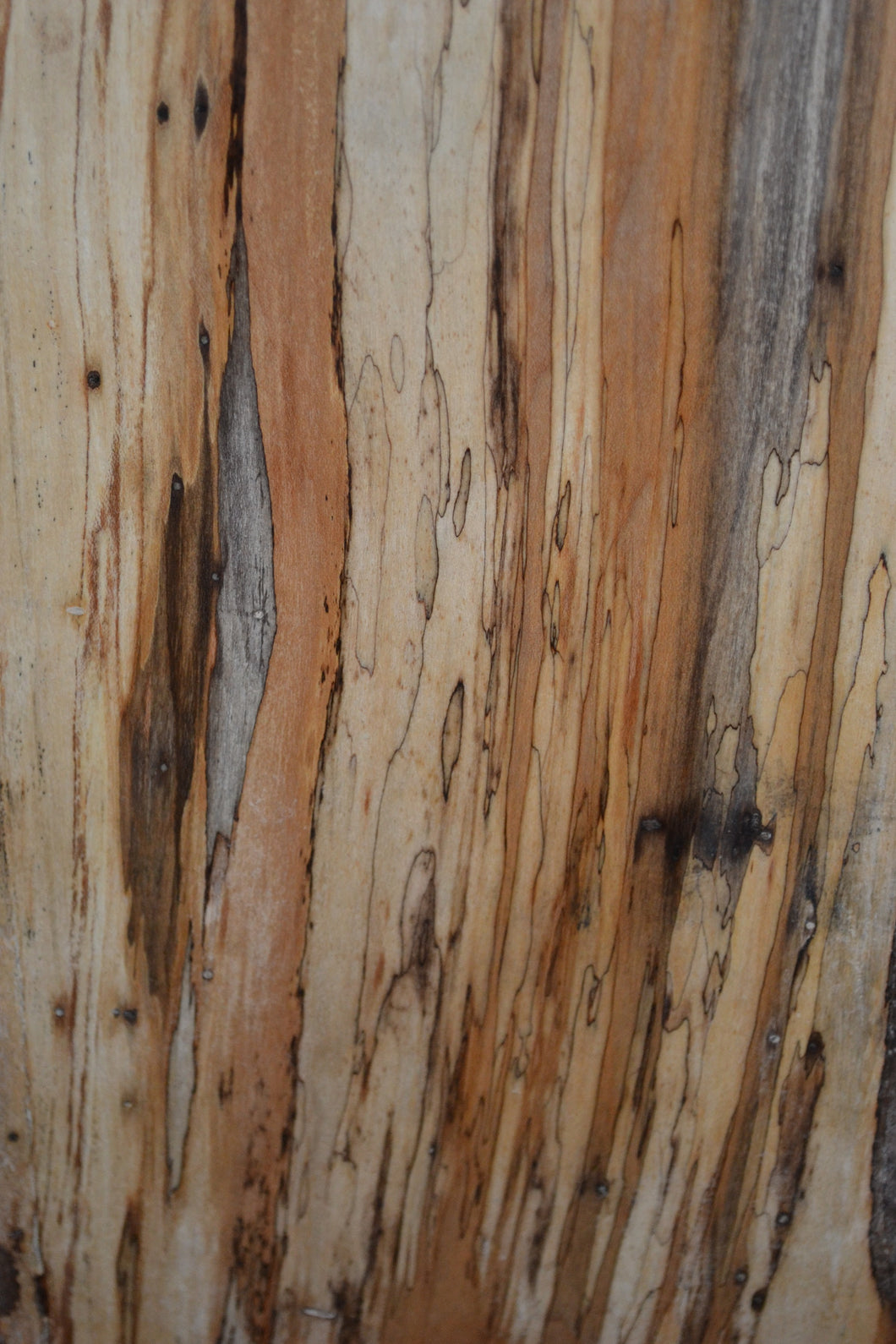 Ambrosia Spalted Maple Live Edge Slab (SMLE-1) SOLD