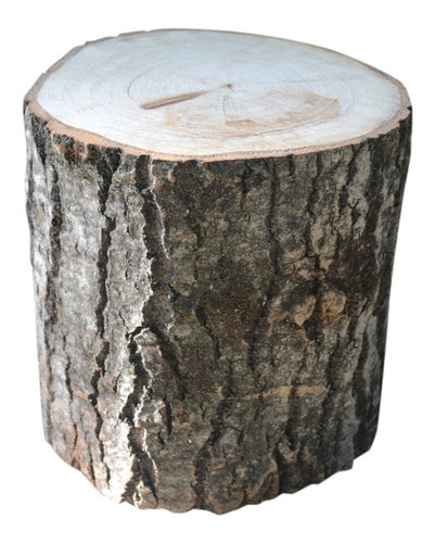 Aspen Tree Stump Large 8