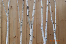 Birch Forked Poles               Two- 3ft to 4ft