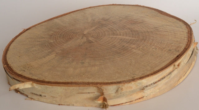 Birch Log/Tree Round/Slice/Disk <p>4 1/2