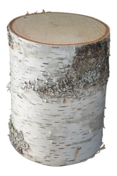 Birch Tree Stump Large 10 1/2