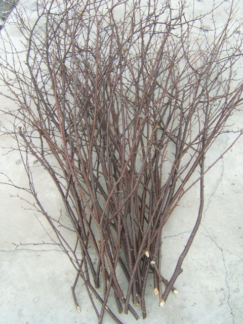 Birch Branches/ Twigs  25- 3' to 4 ft tall