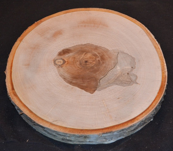Birch Log/Tree Round/Slice/Disk <p>8
