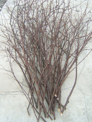Birch Branches/Twigs <p> 25-  5' to 6 ft tall<p>