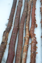 "Red River Birch Poles - 2.5"" to 3.5"" D x 4 ft"