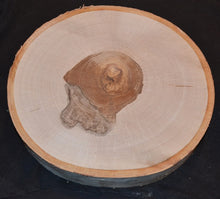 "Birch Log/Tree Round/Slice/Disk <p>11"" to 13"" x 1"" Thick Set of Two"