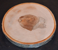 "Birch Log/Tree Round/Slice/Disk <p>8"" to 9"" x 1"" Thick- Set of Two"
