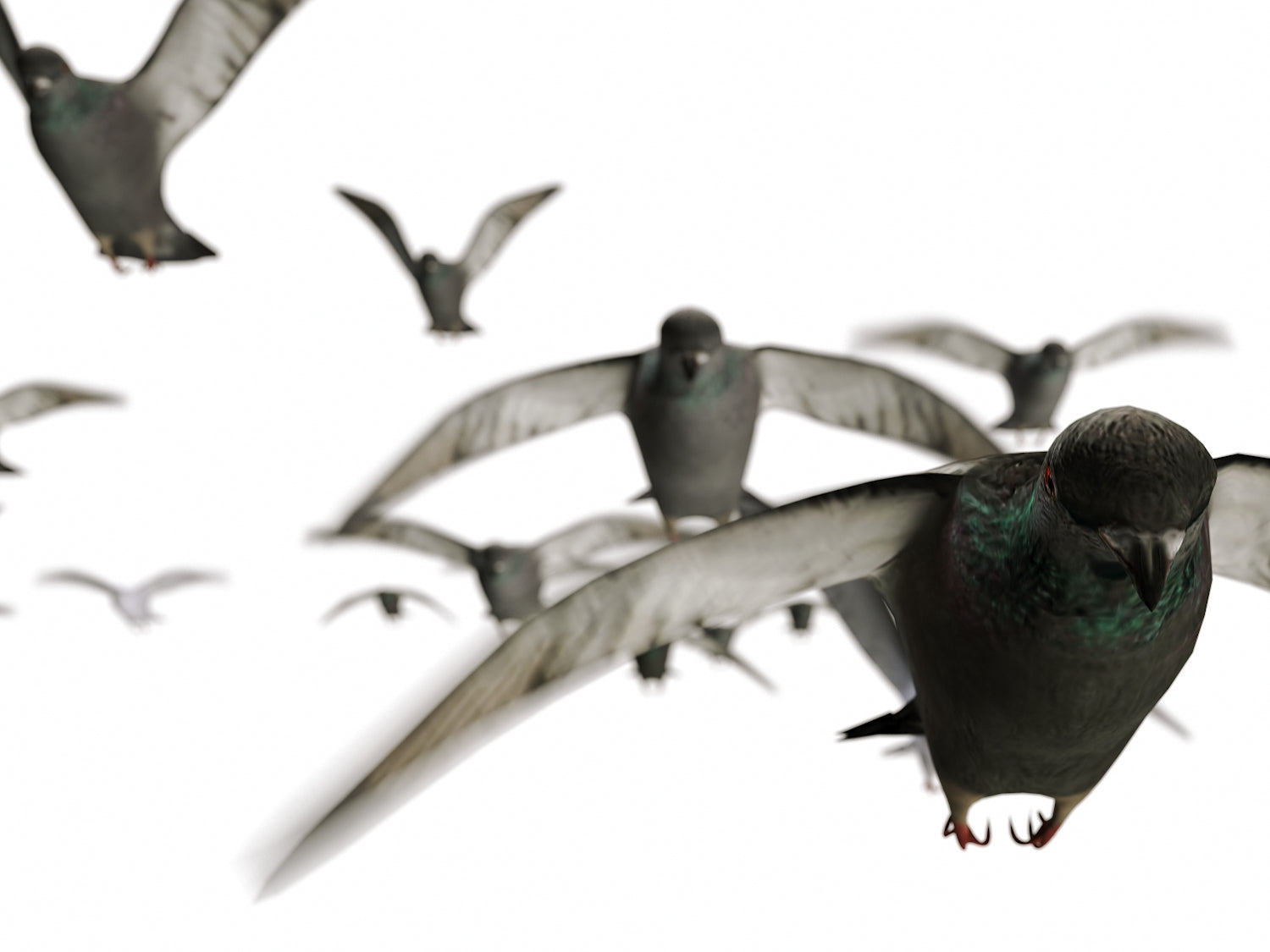 Animated Flying Pigeons Set
