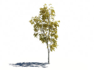 Load image into Gallery viewer, Birch Trees Set - Nouvelle Mesure Lab