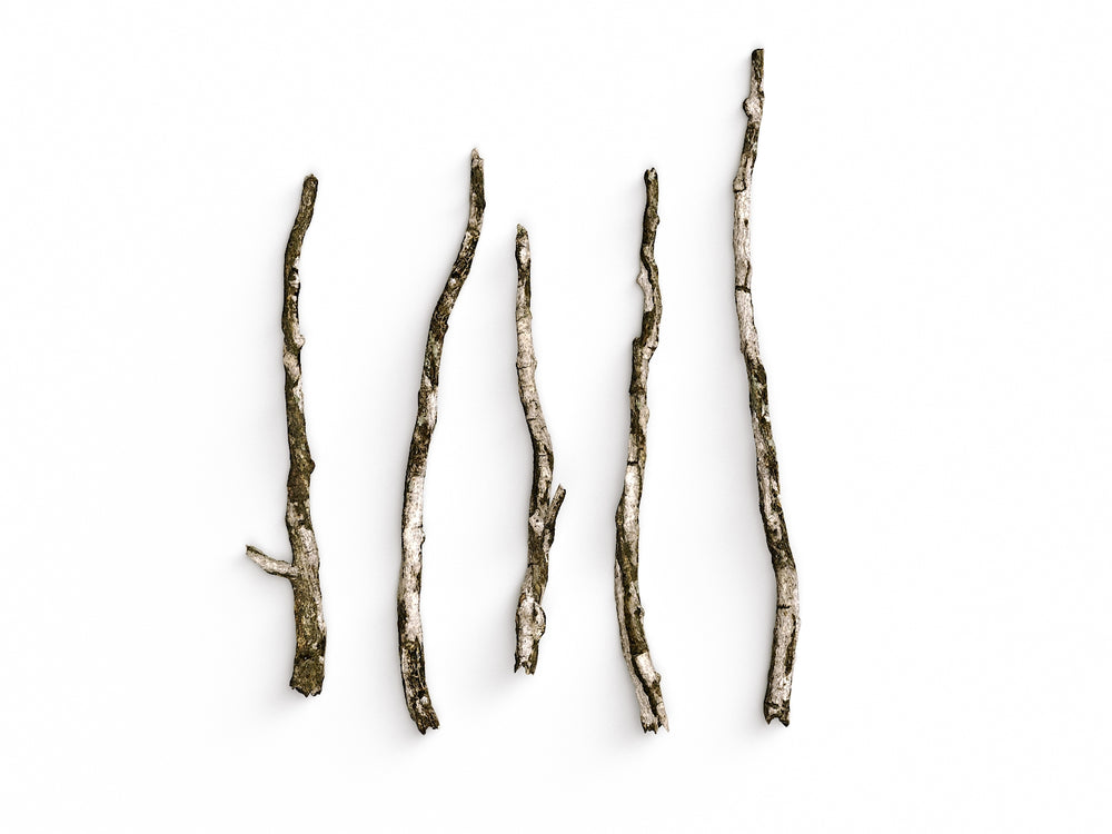 Branches Set 04 - Nouvelle Mesure Lab