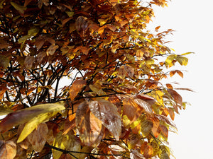 Load image into Gallery viewer, Broadleaf 4 Seasons - Nouvelle Mesure Lab