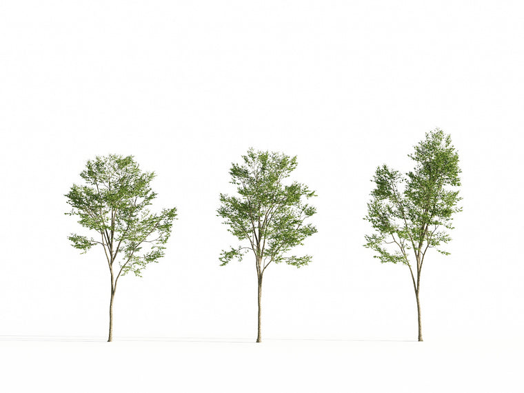 Broadleaf Tree Set