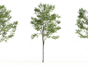 Load image into Gallery viewer, Broadleaf Tree Set - Nouvelle Mesure Lab
