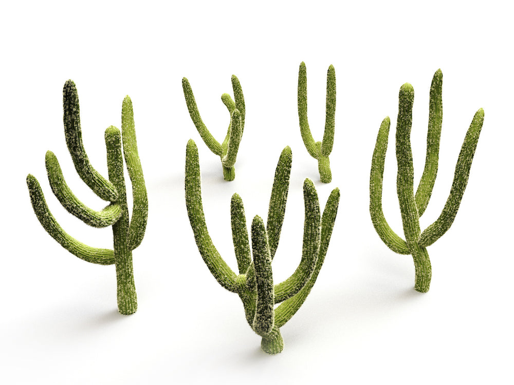 Cactus set - Nouvelle Mesure Lab