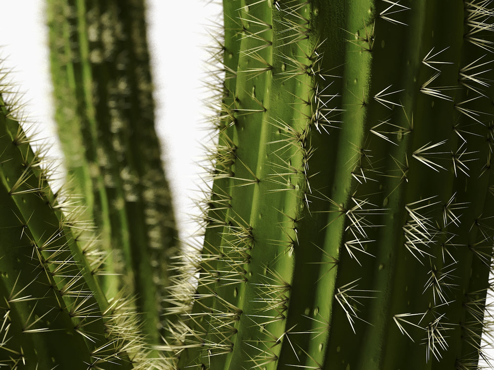 Load image into Gallery viewer, Cactus set - Nouvelle Mesure Lab