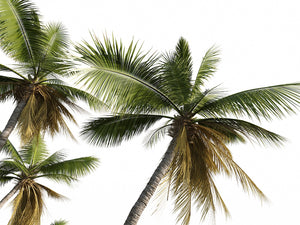Load image into Gallery viewer, Coconut Tree Set - Nouvelle Mesure Lab