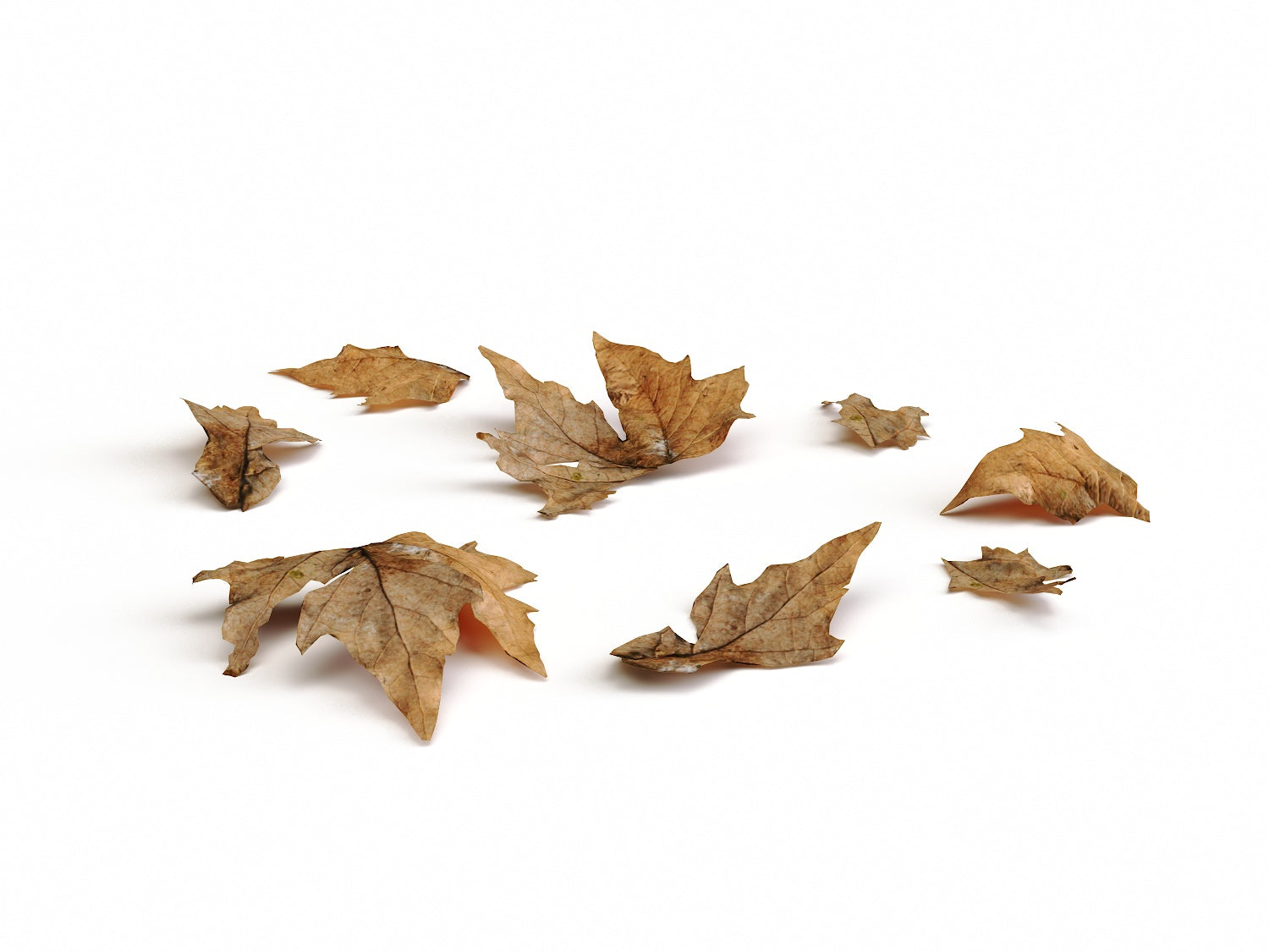 Dead Leaves Set 01 - Nouvelle Mesure Lab