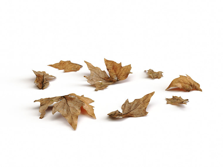 Dead Leaves Set 01