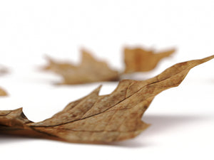 Load image into Gallery viewer, Dead Leaves Set 01 - Nouvelle Mesure Lab