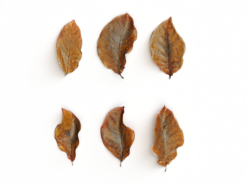 Dead Leaves Set 02