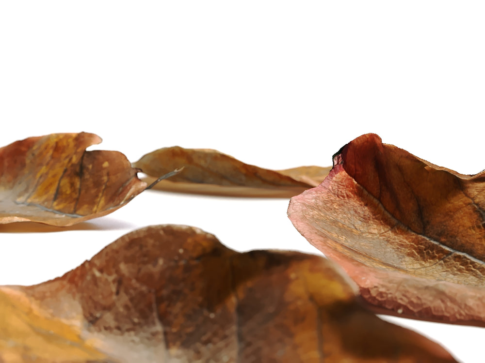 Load image into Gallery viewer, Dead Leaves Set 02 - Nouvelle Mesure Lab
