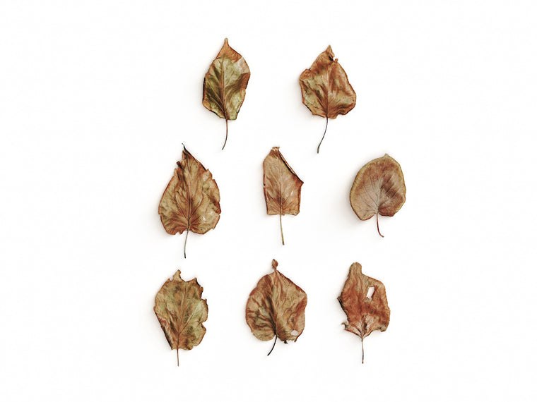 Dead Leaves Set 03