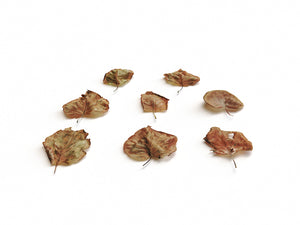 Load image into Gallery viewer, Dead Leaves Set 03 - Nouvelle Mesure Lab