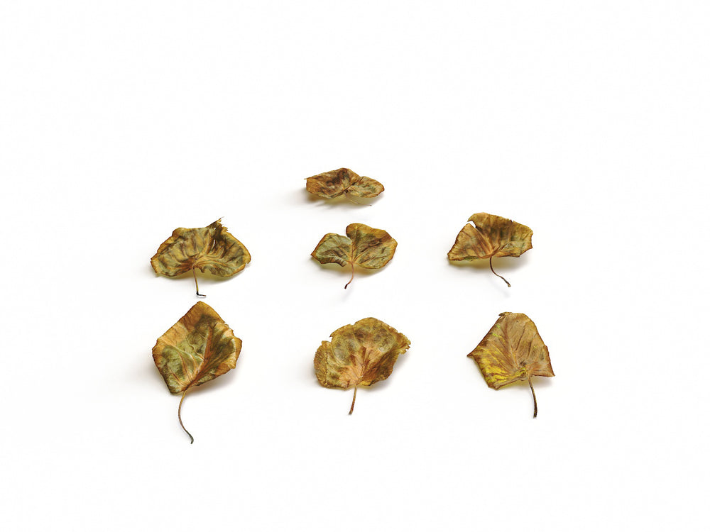 Dead Leaves Set 04 - Nouvelle Mesure Lab