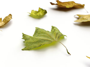 Load image into Gallery viewer, Dead Leaves Set 05 - Nouvelle Mesure Lab