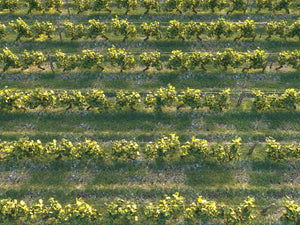 Load image into Gallery viewer, Dionysus Vineyard Pack - Nouvelle Mesure Lab