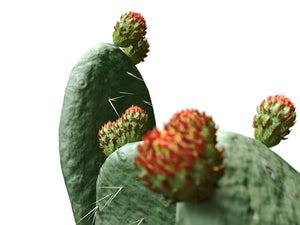Load image into Gallery viewer, Flat Cactus Set - Nouvelle Mesure Lab