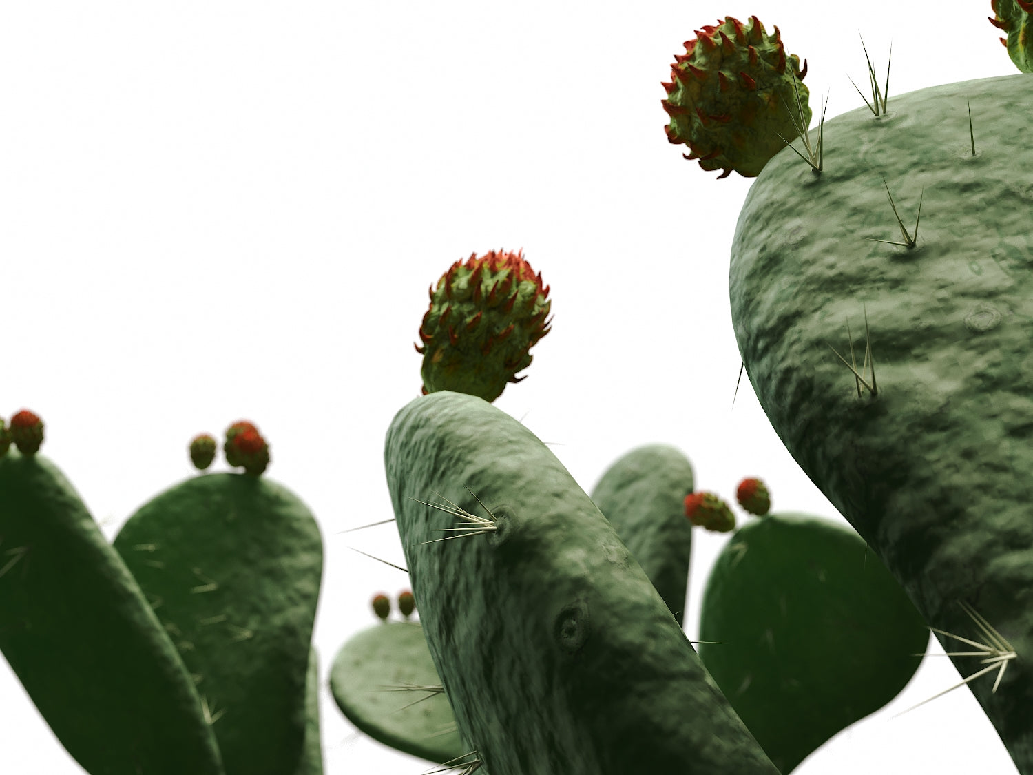 Flat Cactus Set - Nouvelle Mesure Lab