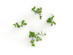 Ground Cover Plants Set - Nouvelle Mesure Lab