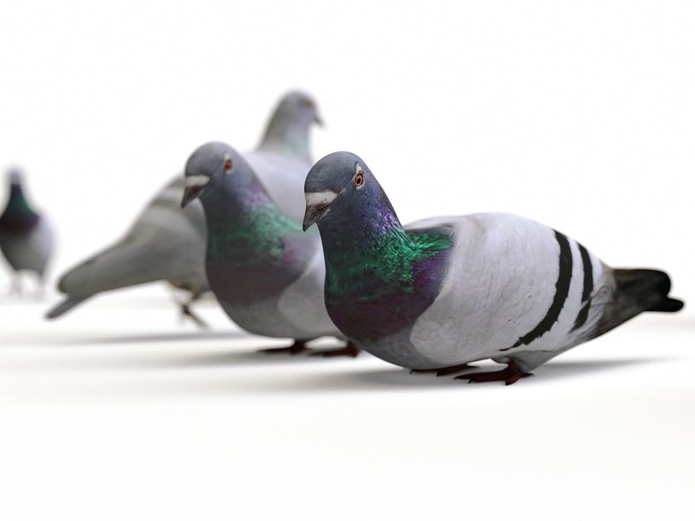 Load image into Gallery viewer, Animated Ground Pigeons Set - Nouvelle Mesure Lab