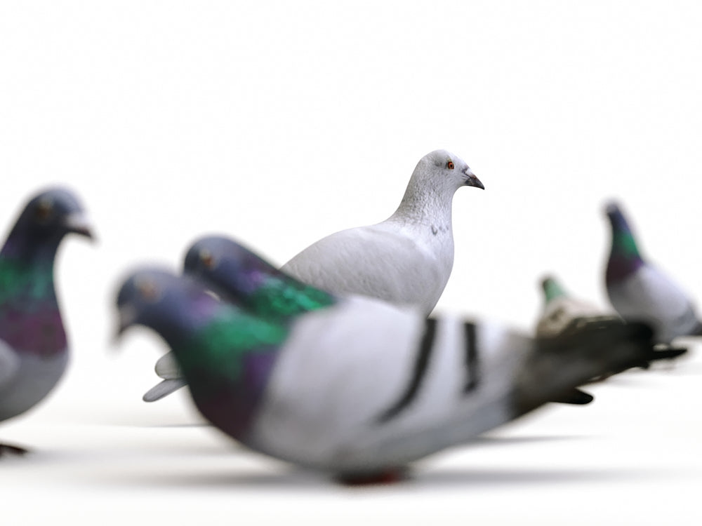 Load image into Gallery viewer, Ground Pigeons Set - Nouvelle Mesure Lab