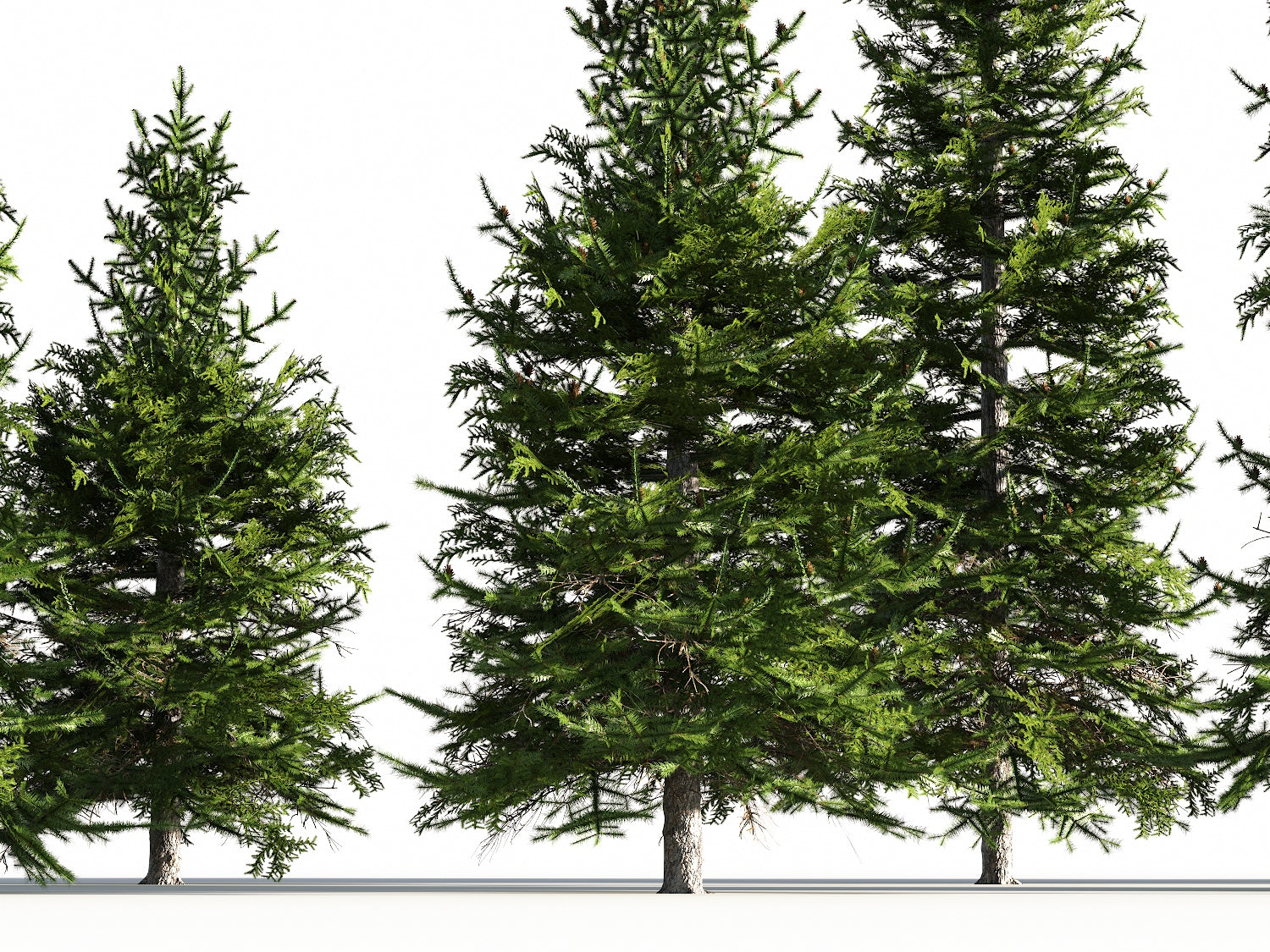 Low Poly Fir Tree Set - Nouvelle Mesure Lab