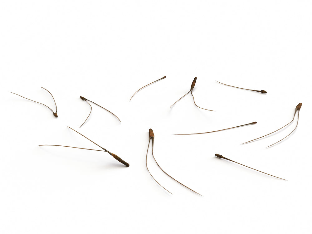 Pine Needles Set - Nouvelle Mesure Lab