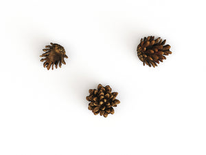 Load image into Gallery viewer, Pine Cone Set - Nouvelle Mesure Lab