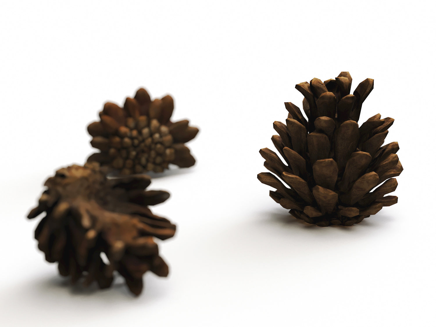 Pine Cone Set - Nouvelle Mesure Lab