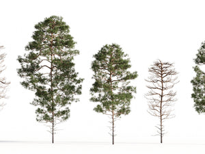 Load image into Gallery viewer, Salzmann Pine Tree Set - Nouvelle Mesure Lab