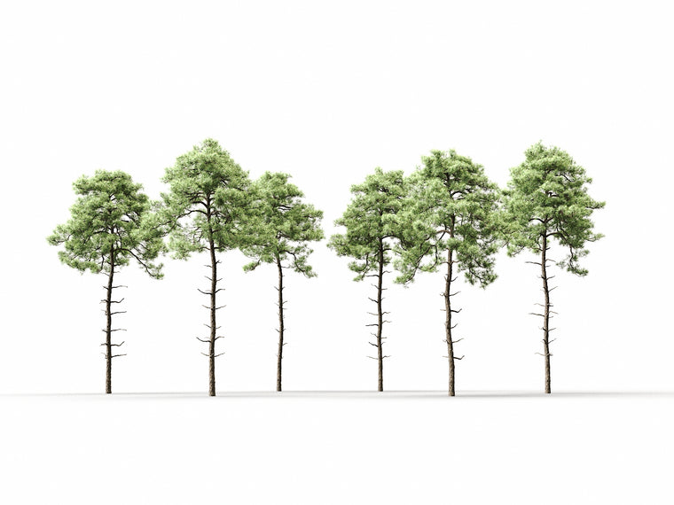 Scott Pine Tree Set